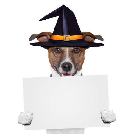 halloween placeholder banner dog Stock Photo - 15777690