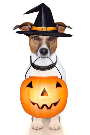 truc: halloween trick or treat pompoen heks hond Stockfoto
