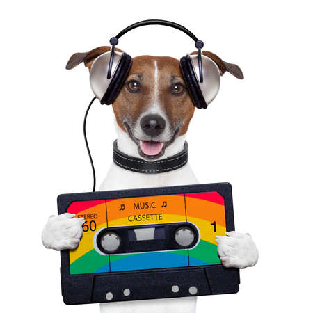 music cassette tape headphone dog photo