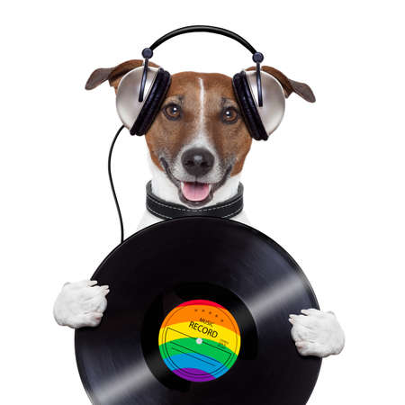 music headphone vinyl record dog photo