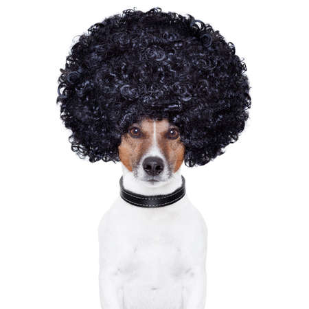 wig: afro look hair dog funny Stock Photo