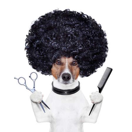 coupe de cheveux homme: chien peigne coiffeur ciseaux Banque d'images