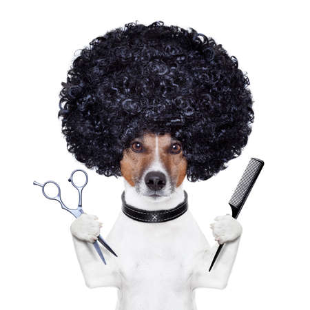 beauty saloon: hairdresser  scissors comb dog