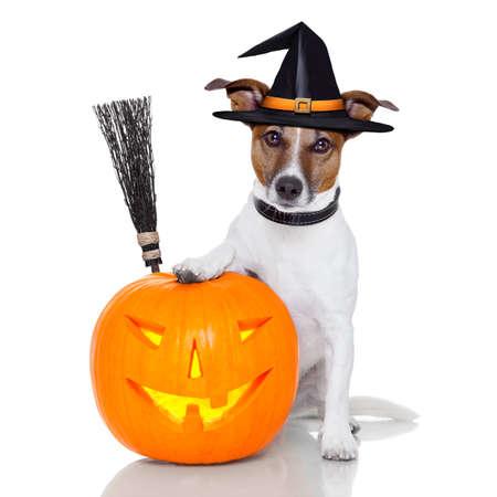 cão de bruxa de abóbora de halloween com uma vassoura