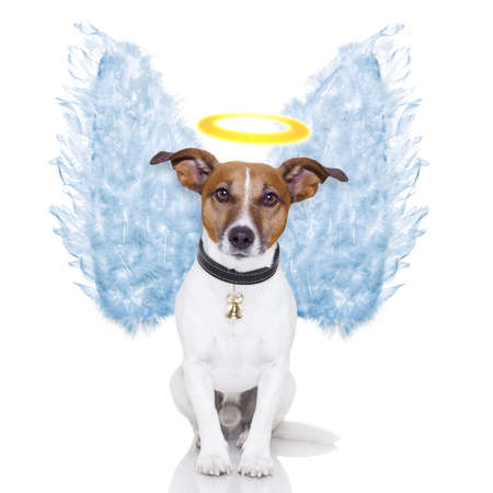 angel dog feather wings aura nimbus photo