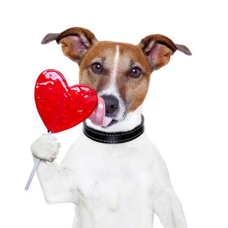 valentine lollipop heart dog licking Foto de archivo