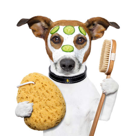 body grooming: wellness spa wash sponge dog