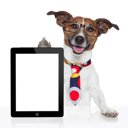 electronic tablet: business dog tablet pc ebook computer notebook Stock Photo