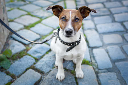 terriers: homeless dog lonely with leash