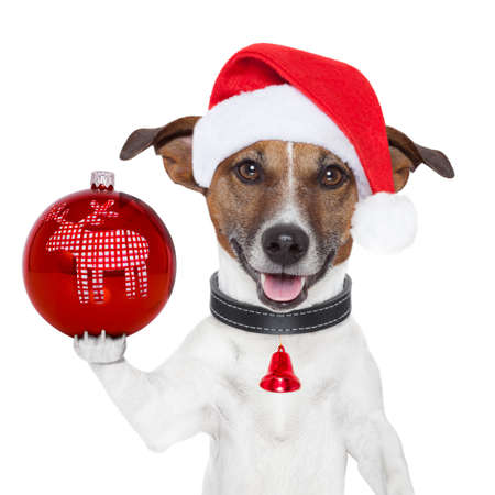 santa dog with  christmas ball on paw and bell photo