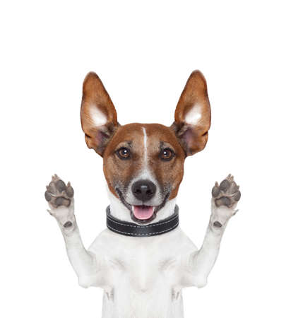 silly crazy dog with paws up Stock Photo - 16145956