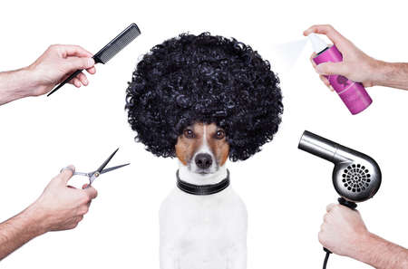 dog grooming: hairdresser  scissors comb dog dryer hair Stock Photo