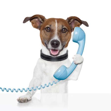hablando por telefono: perro en el tel�fono hablando y llamando Foto de archivo
