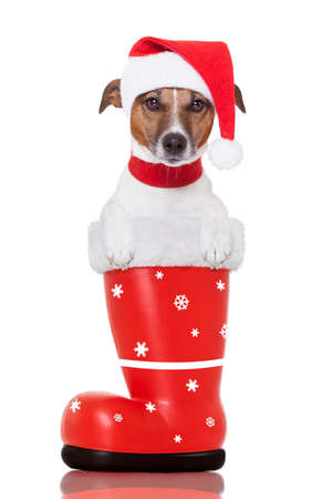santa christmas dog in a red boot Stock Photo - 16145961