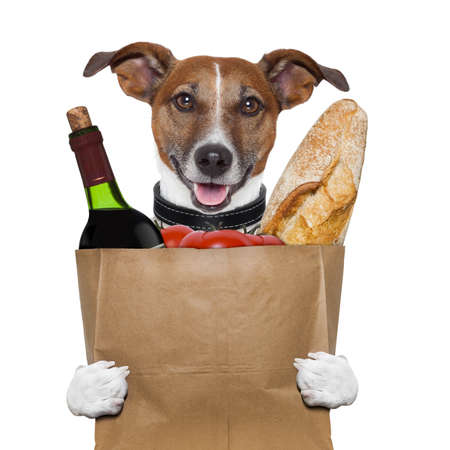 grocery bag dog wine tomatoes bread photo