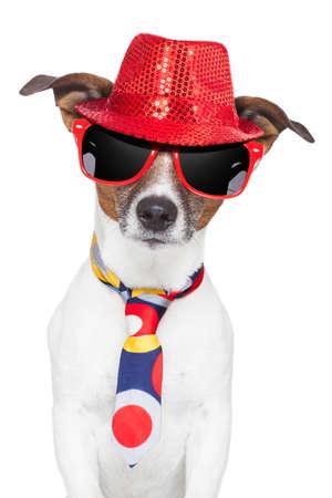 gente loca: locos tontos divertidas gafas para perros sombrero y corbata
