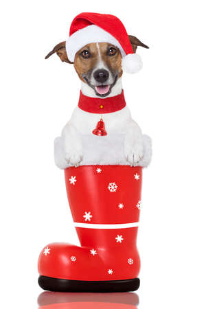 santa christmas dog in a red boot Stock Photo - 16255588
