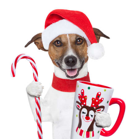 december: santa claus dog with sugar cane and cup