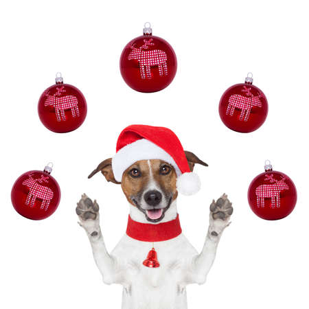 red sphere: christmas dog with santa hat and balls around