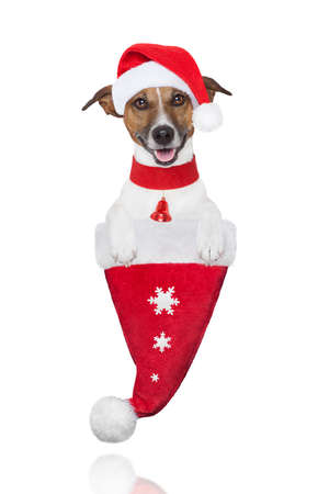 santa christmas dog in a hat with snow flakes Stock Photo - 16255594
