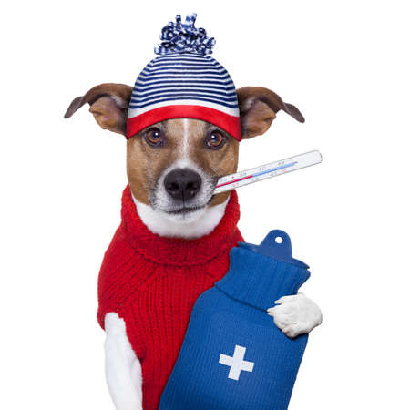cold virus: sick ill cold dog  with fever and hot water bottle