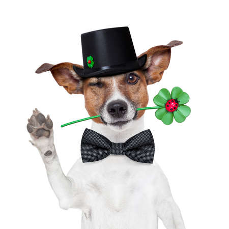 good luck chimney sweeper dog with hat and clover Stock Photo - 16401583