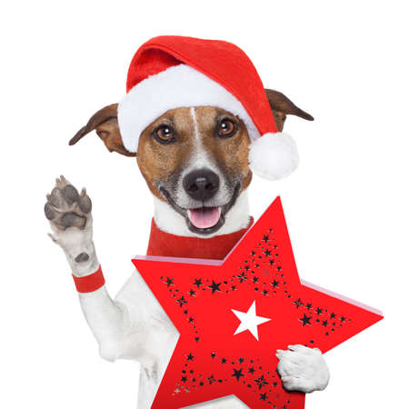 surprise christmas dog with a red present box Stock Photo