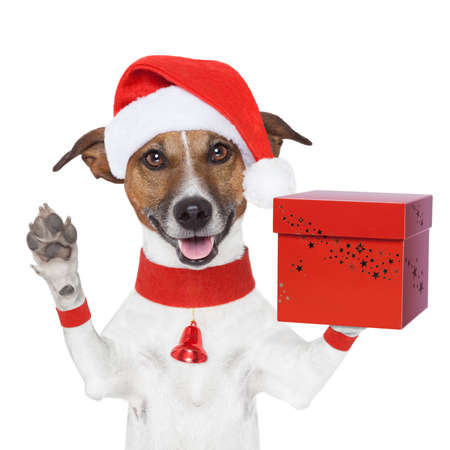 surprise christmas dog with a present red box Stock Photo - 16401585