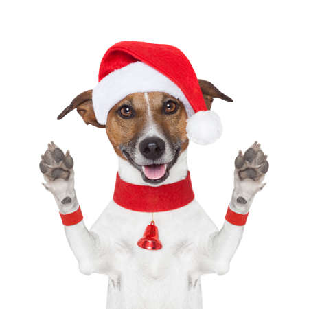 hello goodbye high five christmas  dog with paws up Stock Photo