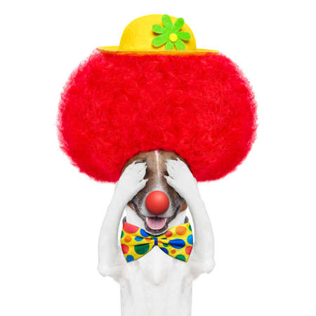 clown dog with red wig and hat hiding and covering both eyes photo