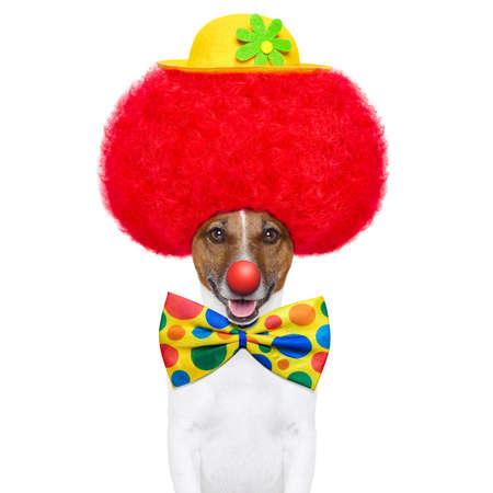 clown cirque: chien clown avec perruque rouge et le nez avec un chapeau Banque d'images