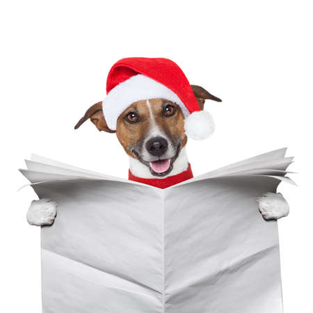 christmas dog reading a newspaper photo