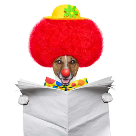clown dog with red wig and hat reading a newspaper photo