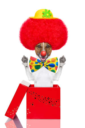 clown dog with red wig and hat jumping out of the box photo
