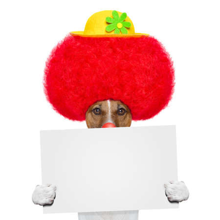 clown dog with red wig and hat holding a banner Stock Photo - 16662067