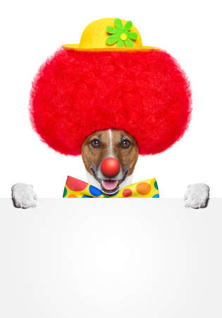 clown dog with red wig and hat holding a banner photo