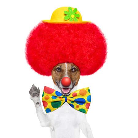 dog nose: cane clown con parrucca rossa e il naso agitando ciao