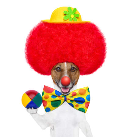 clown dog with red wig and nose holding a ball