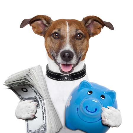 recoger: dinero perro sosteniendo una hucha azul Foto de archivo