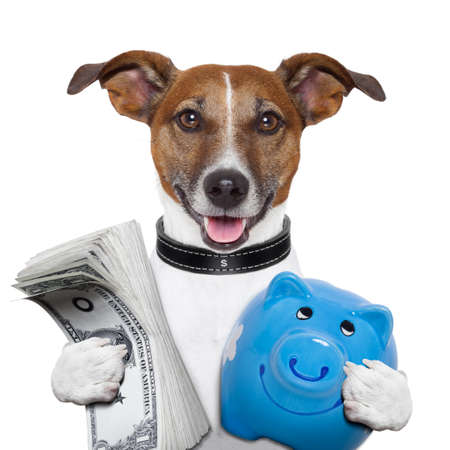 money dog holding a blue piggy bank