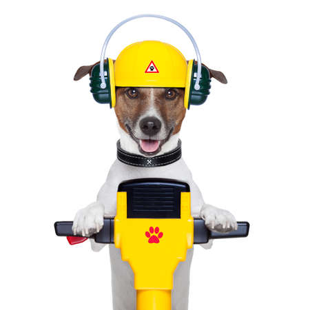diy tool: handyman dog work in progress with jackhammer Stock Photo