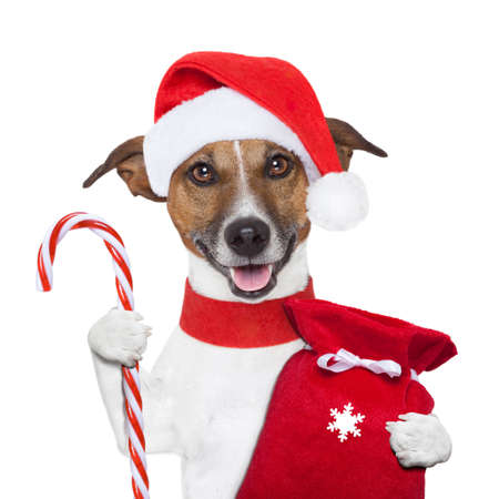 christmas dog holding a candy stick and sack photo