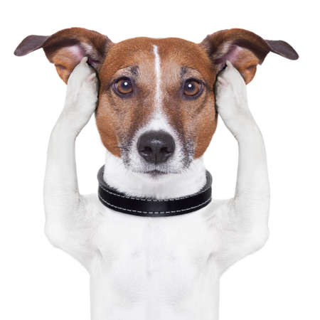 covering both ears dog with paws Stock Photo