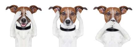 duymak: See No Evil, hiçbir kötülük duymak hiçbir kötülük köpek konuşmak Stok Fotoğraf