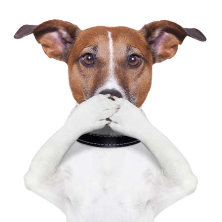 evil eyes: covering the mouth dog with paws Stock Photo