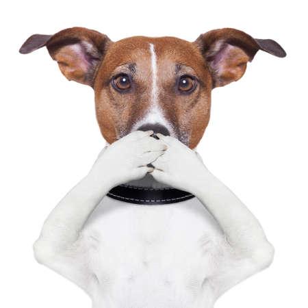 silencio: que cubre la boca del perro con las patas Foto de archivo