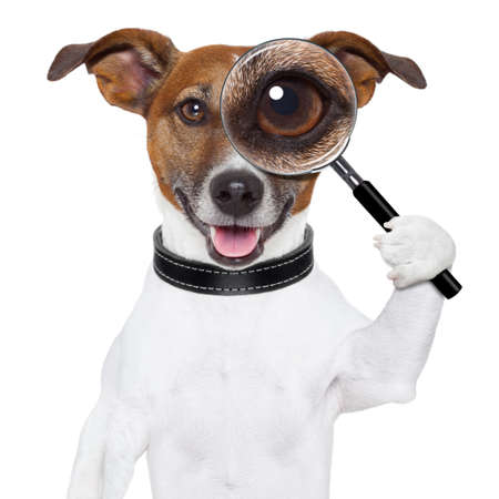 find glass: dog with magnifying glass and searching