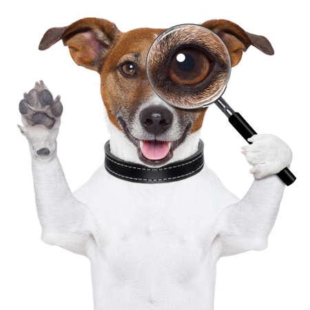 lupa: perro con la lupa y la b�squeda Foto de archivo