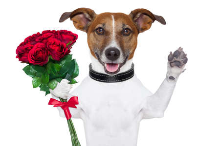 five petals: valentine dog  with a bunch of  red  roses vawing