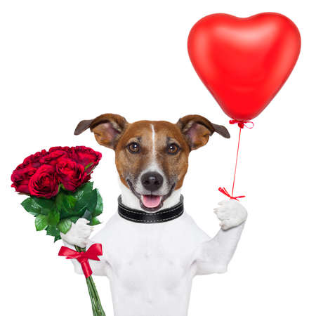 valentine dog  with a bunch of  red  roses and a red balloon Stock Photo - 16999563